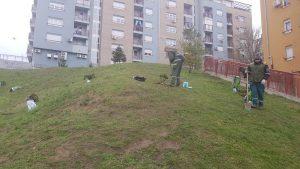 озелењавање зелених површина у 2020. години, насеље Степа Степановић